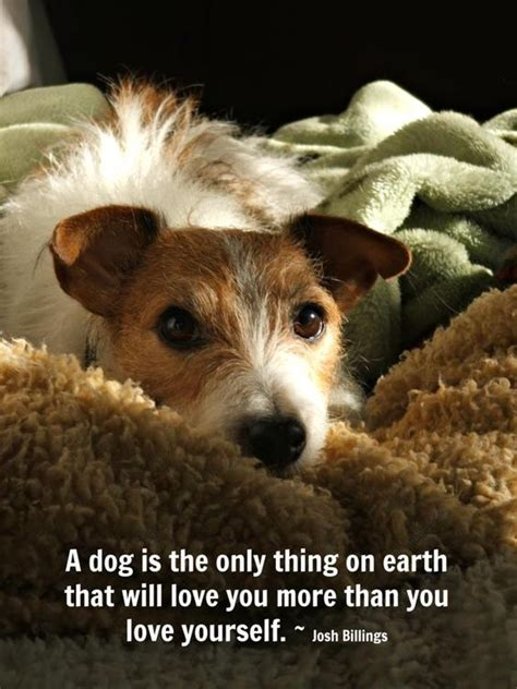 12+ Cute Jack Russell Terrier Dog Quotes And Sayings