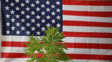 Timeline for Marijuana Legalization in the United States